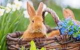 Easter-little bunny-in-basket