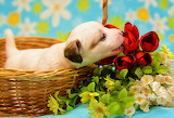 ☺♥ A flower for you...♥