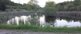 Essex pond