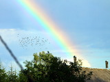 Birds and rainbow