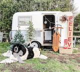 Vintage Camper with Dog at Christmas