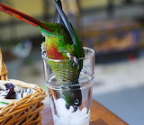 Parrot in a glass with ice