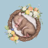 Baby Wombat by Elise Martinson