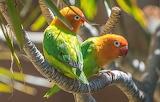 Colorida pareja