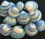 Sharpied SeaShells