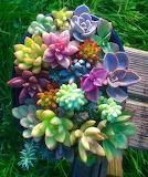 Cactus flower bouquet