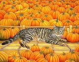 The pumpkin cat Ditz