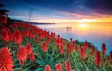 Sea, the sky, clouds, sunset, flowers, pier, USA, aloe, san dieg