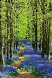 BLUE GREEN WORLD