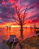 Sunrise Lake Bonney Southern Australia