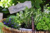 small herbs garden