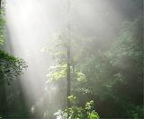Mile 0315 Primal Forest