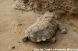 Sleeping Turtle / tortue qui dort