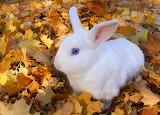 Rabbit in leaves