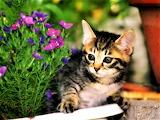 #Garden Kitty