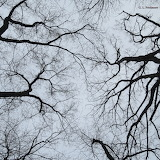 Limbs & Branches