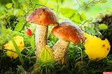 грибы 46
