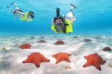 Snorkeling with starfish
