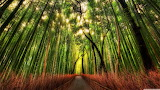 #Bamboo Forest