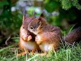 Cute-squirrels