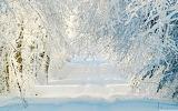Зима лесная сказка