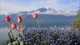 Flores en paisaje