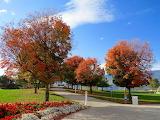 White-trash-bin-under-red-leaves-tree-226424