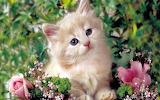 Cute-Kitten-kittens-16122928-1280-800