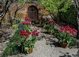 USA_Gardens_Spring_Tulips_Filoli_Gardens_563950_1280x925