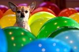 BalloonsHuey_WayneSilver