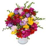 ^ Multi-colored freesia in vase