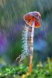 Wet Caterpillar