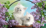 Background-widescreen-cute-animals