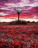 South Australia's Marree