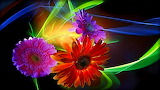 wallpapers-colorful-abstract-flowers