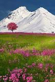 ^ The Swiss Alps, Switzerland