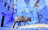 Man with donkey Chefchaouen Morocco