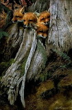 Animals tumblr mohnblumesworld Foxes