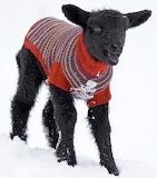 Bah Bah Black Sheep in his snow coat.