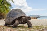 Turtle @doll28