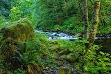 USA_Forests_Wahclella_Falls_Oregon_Tree_stump_Moss_512788_1280x8