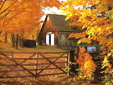 Beautiful Autumn leaves Buildings fence