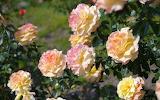 Flower garden plant (364)