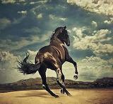 Horses - Western Stars