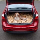 Maddie The Coonhound-Jackpot!