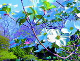 Painting Of Dogwood Flowers In Spring