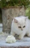 Cats - White Kitten