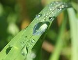 gouttes d'eau / dew drop