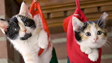 Gift Kitty's