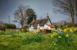 England Houses Spring Daffodils Appleby Grass 520209 1280x824